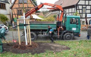 """Nach der Pflanzung der """"Luther-Linde"""" werden Restarbeiten erledigt - wie hier die Rasenansaat"""