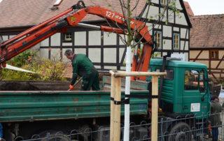 Gepflanzter Lindenbaum im Rahmen einer Spendenaktion am Dresdner Körnerplatz