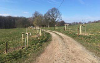 Obstgehölzpflanzung entlang von Wegen in der Sächsischen Schweiz
