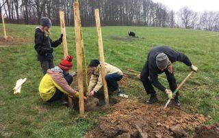Freiwillige helfen bei der Baumpflanzung in der Sächsischen Schweiz